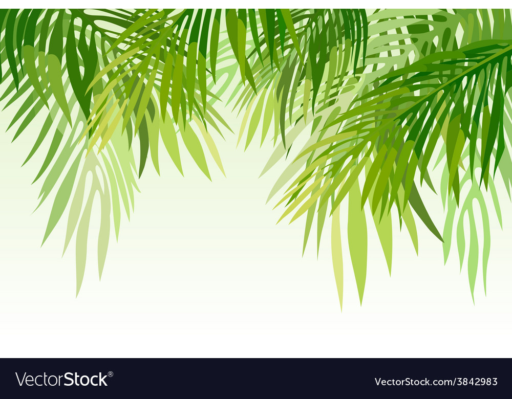 Green palm leaves vector | Price: 1 Credit (USD $1)