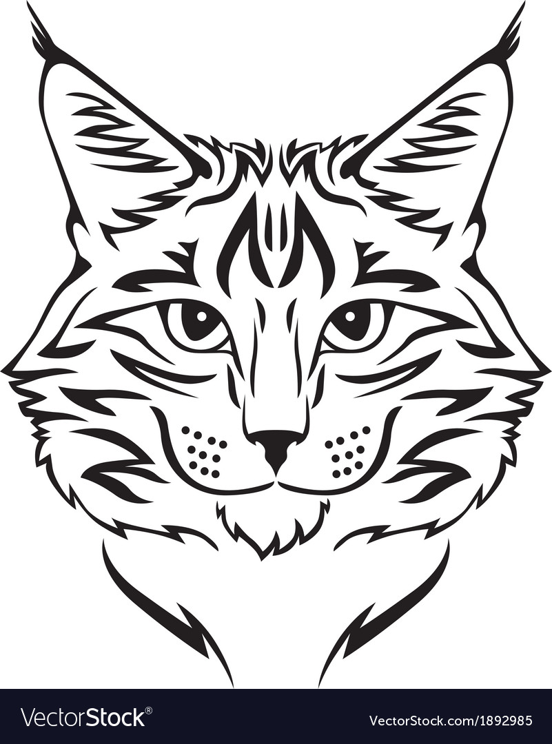 Beauty cat vector | Price: 1 Credit (USD $1)
