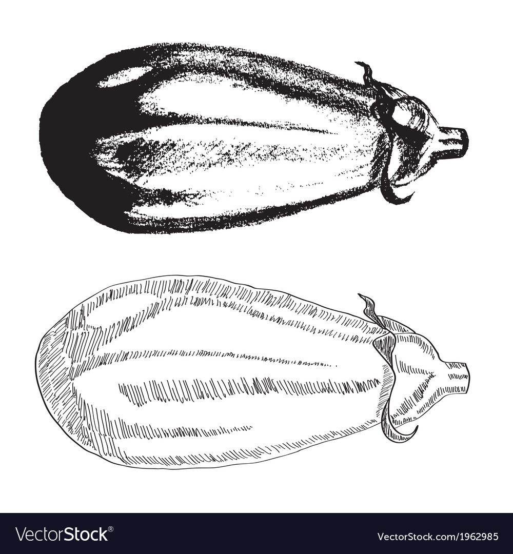 Hand drawn eggplant vector | Price: 1 Credit (USD $1)