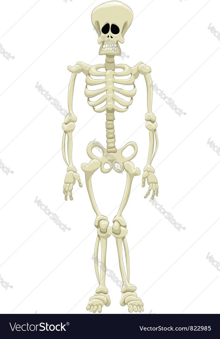 Skeleton vector | Price: 3 Credit (USD $3)