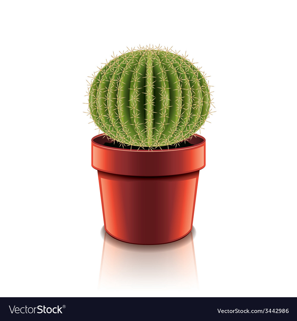 Cactus isolated vector | Price: 1 Credit (USD $1)