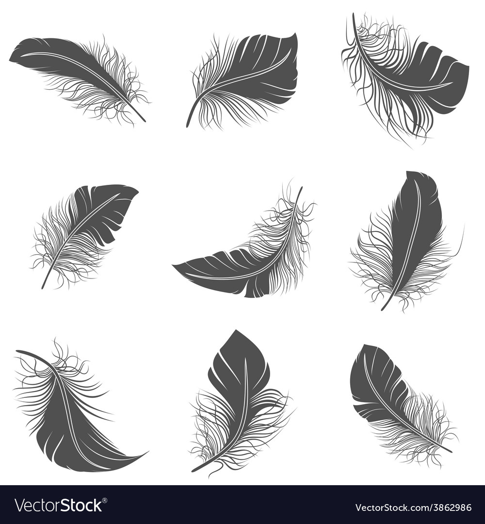 Feather black set vector | Price: 1 Credit (USD $1)