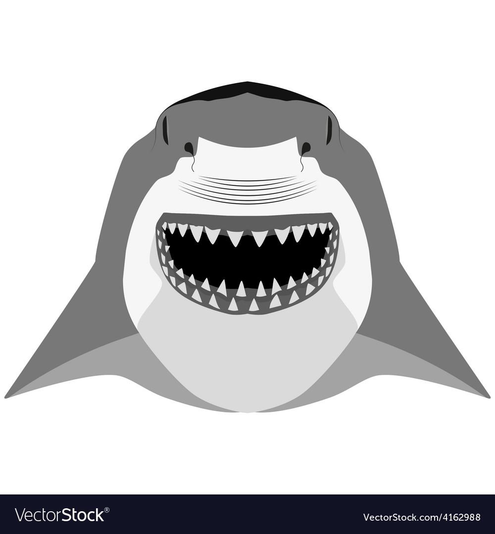 Shark mascot sport symbol vector   Price: 1 Credit (USD $1)