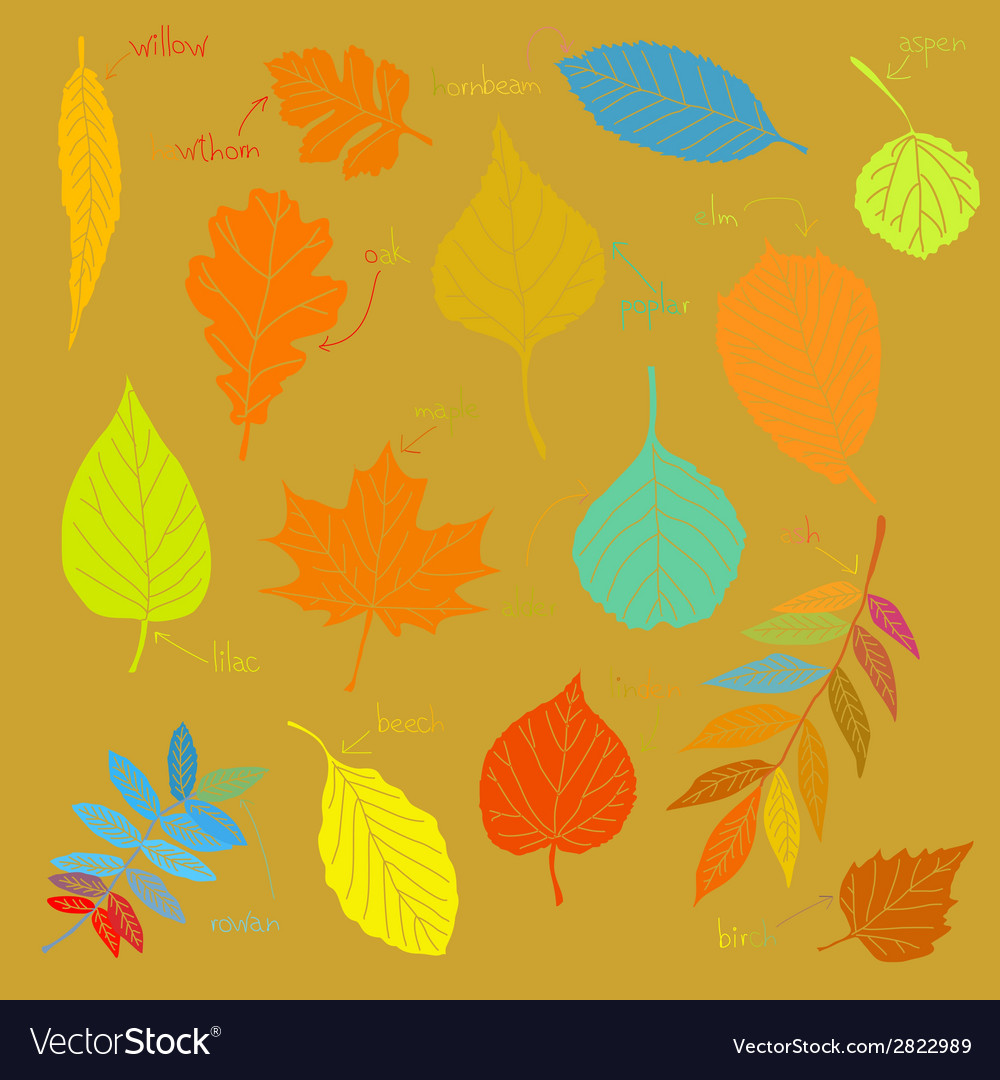 Color sheets vector | Price: 1 Credit (USD $1)