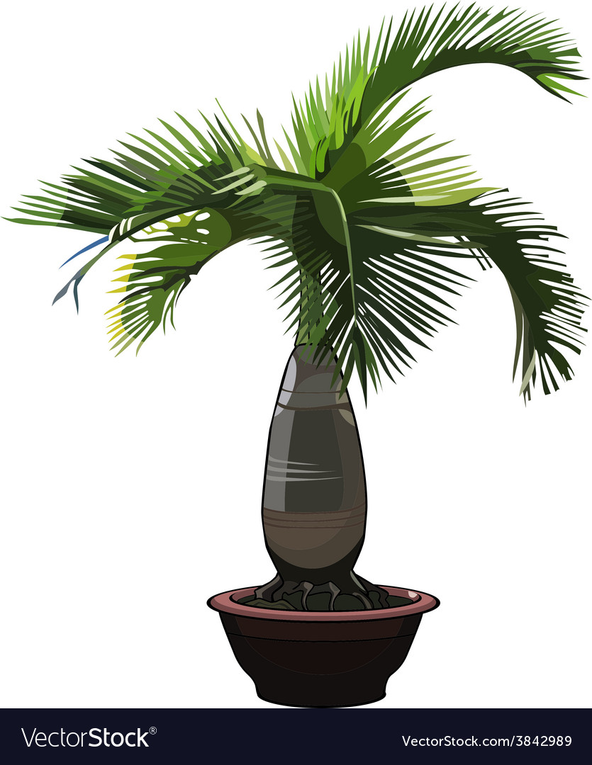Palm tree hyophorbe in a pot vector | Price: 1 Credit (USD $1)