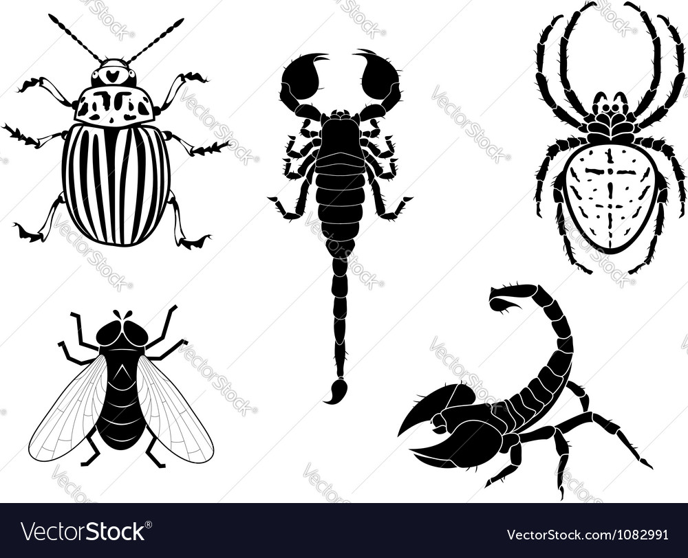 Potato beetle fly scorpion and spider vector | Price: 1 Credit (USD $1)