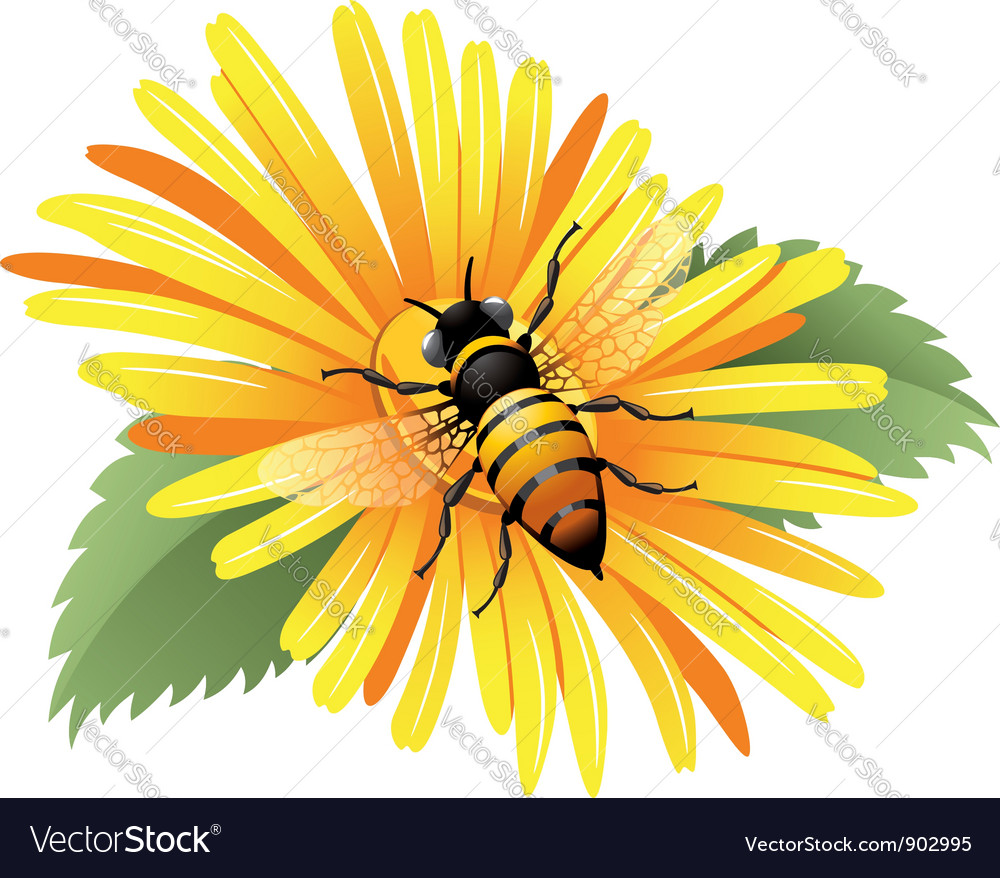 Bee on a yellow daisy vector | Price: 3 Credit (USD $3)