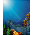 Corals and seaweeds under the sea vector