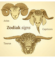 Sketch bull goat and ram head in vintage style vector