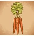 Engraving carrot retro vector