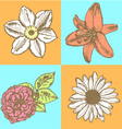 Lily daisy and rose narcissus flower sketch vector