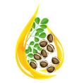 Moringa oleifera oil vector