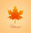 Abstract background with maple leaf vector
