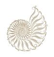 Sketch of seashells vector