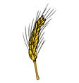 Ear of wheat vector