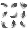 Feather black set vector