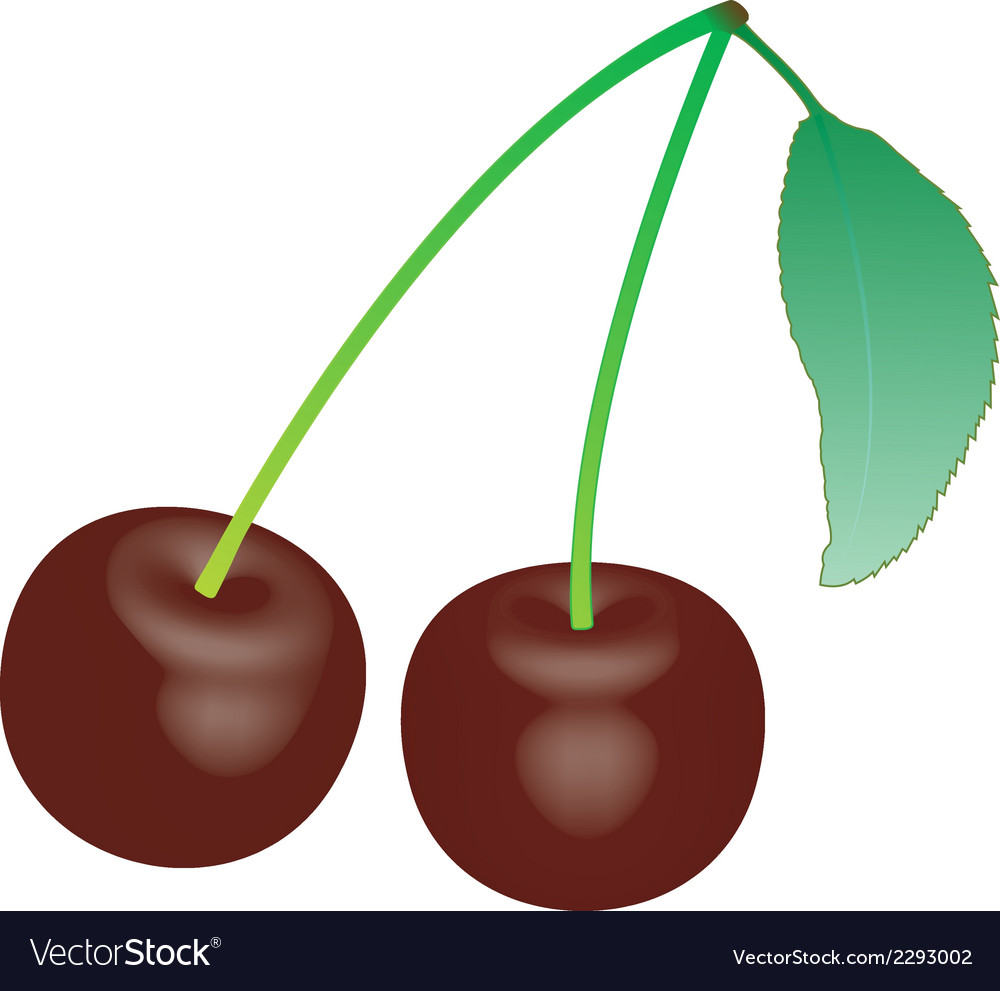 Cherry 1 v vector | Price: 1 Credit (USD $1)