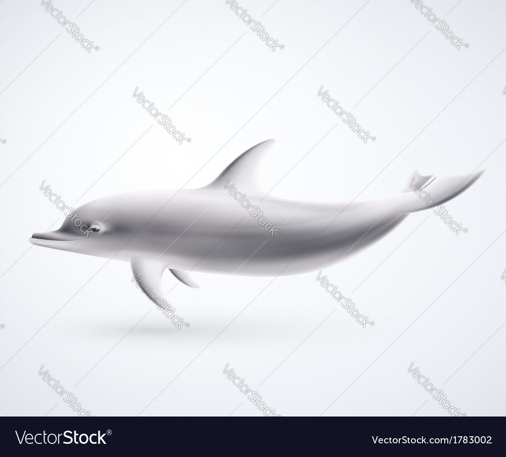 Isolated dolphin vector   Price: 1 Credit (USD $1)