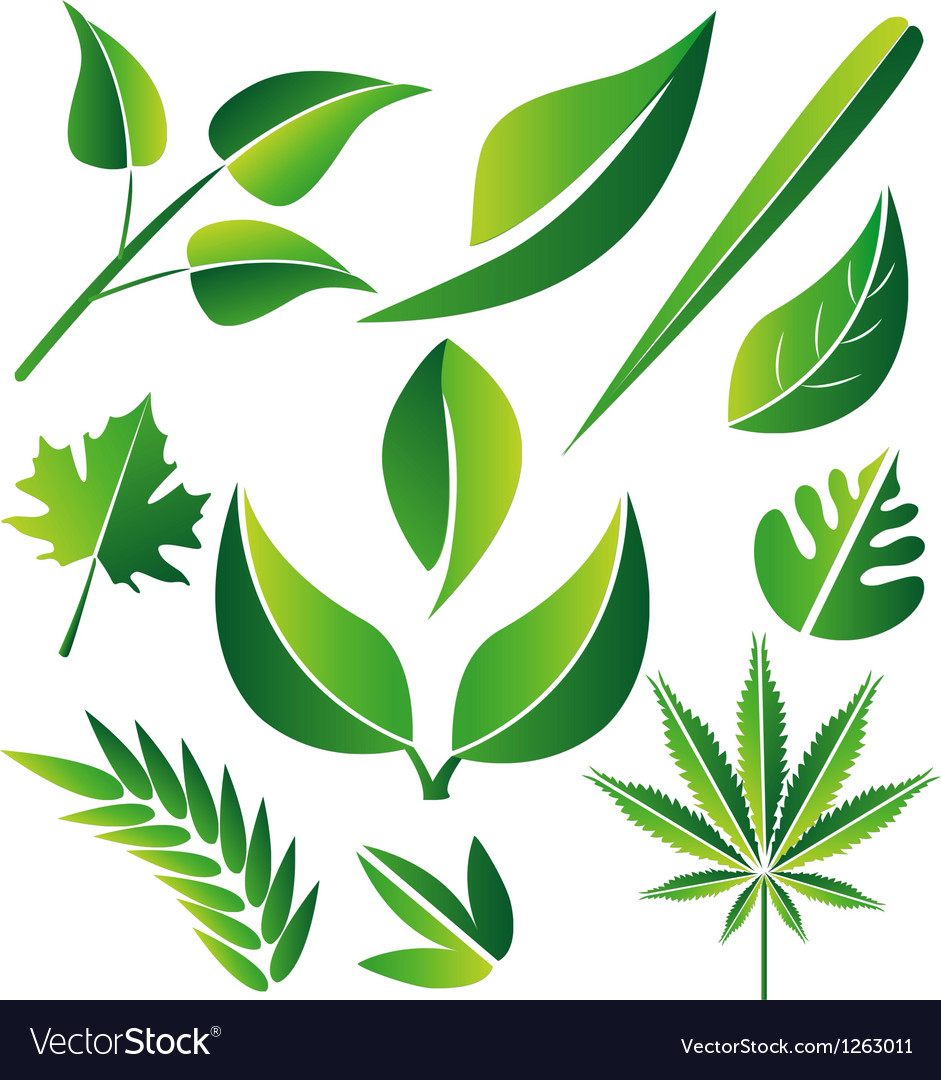 Leaf icon graphic set vector | Price: 1 Credit (USD $1)