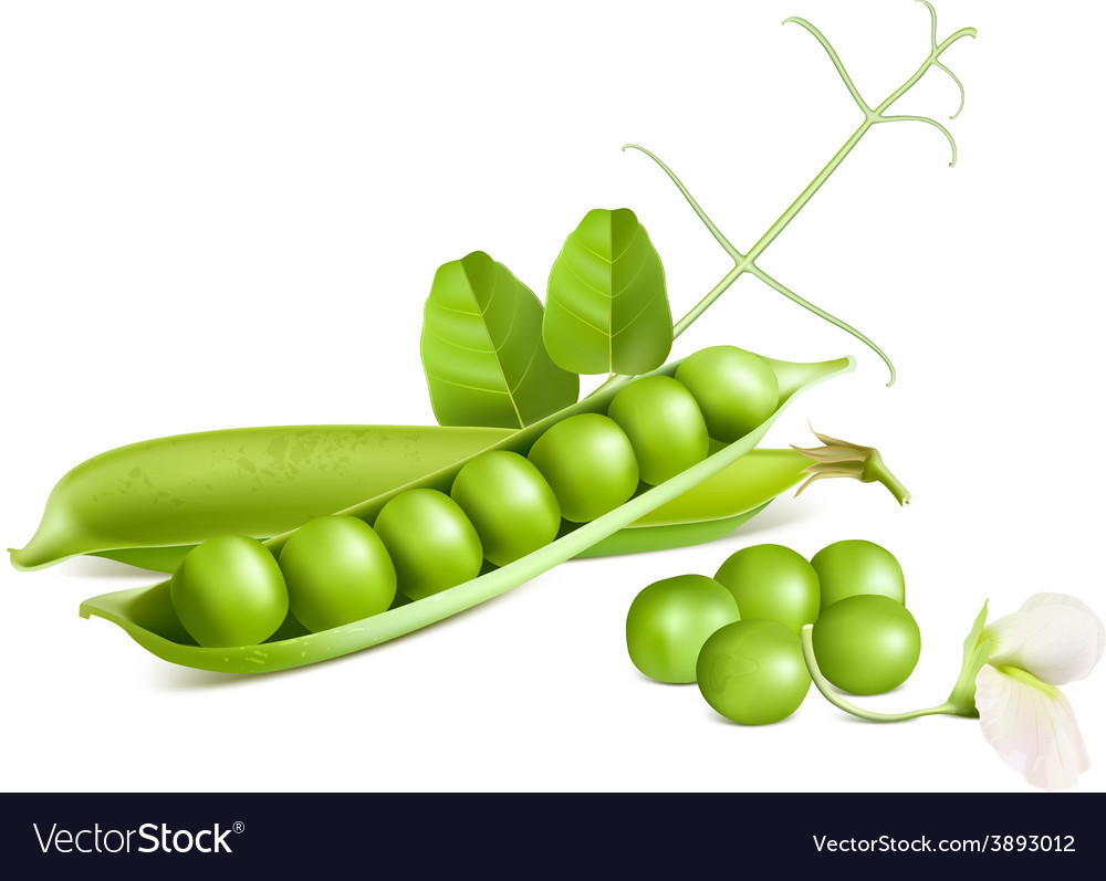 Green peas vector | Price: 3 Credit (USD $3)