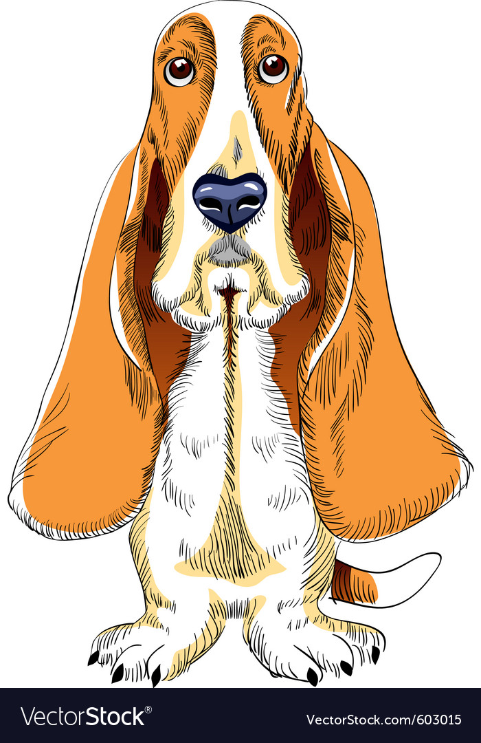 Basset hound vector | Price: 3 Credit (USD $3)