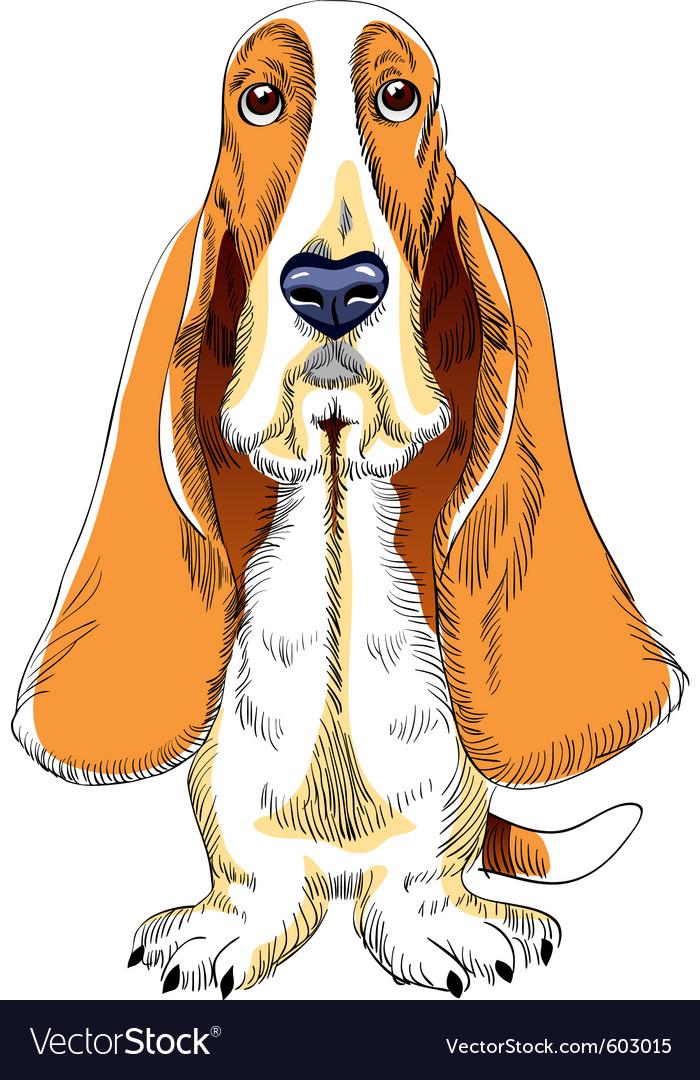 Basset hound vector | Price: 3 Credit (USD $3)