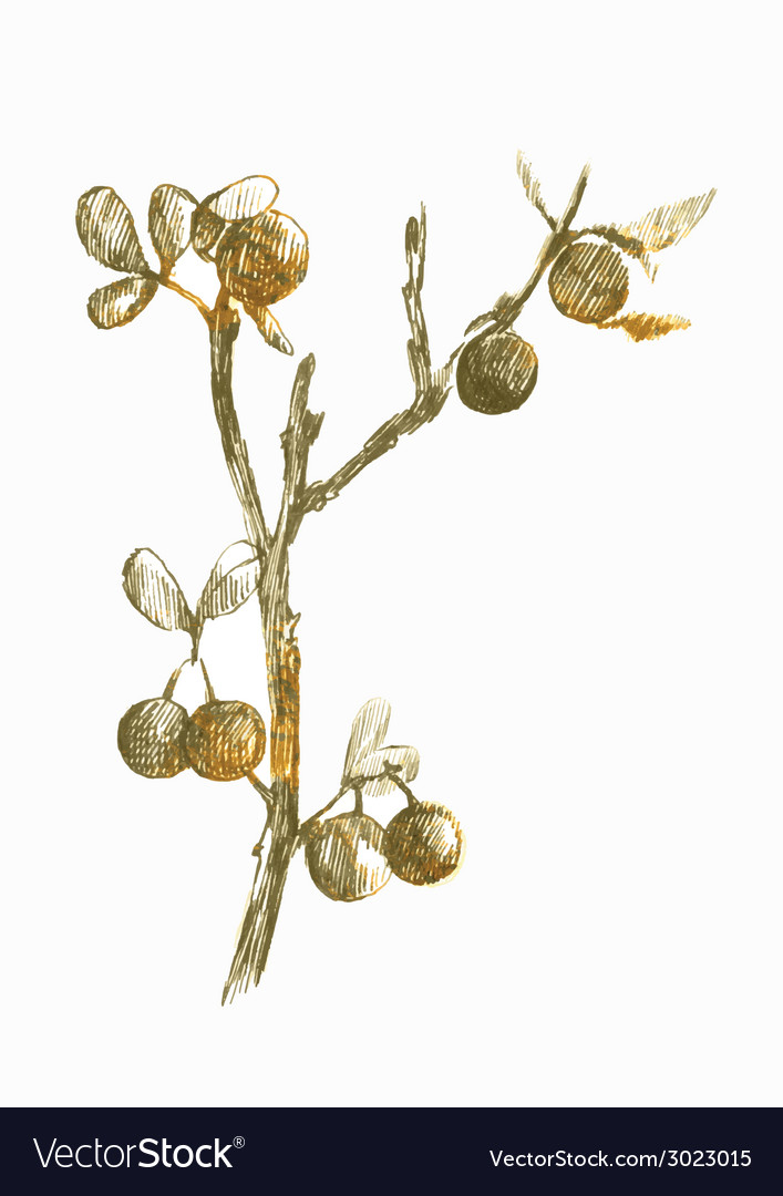 Nature blackthorn vector | Price: 1 Credit (USD $1)