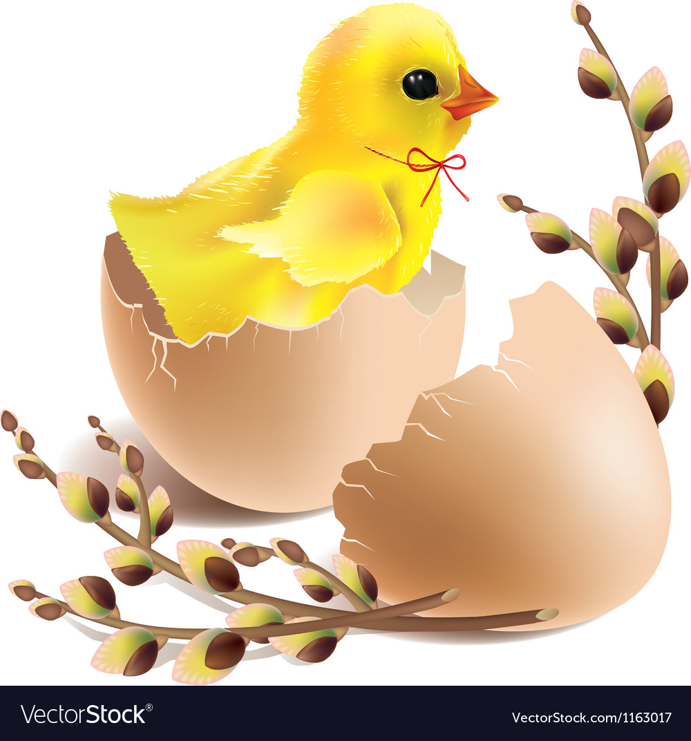 Easter baby chick hatched vector | Price: 1 Credit (USD $1)