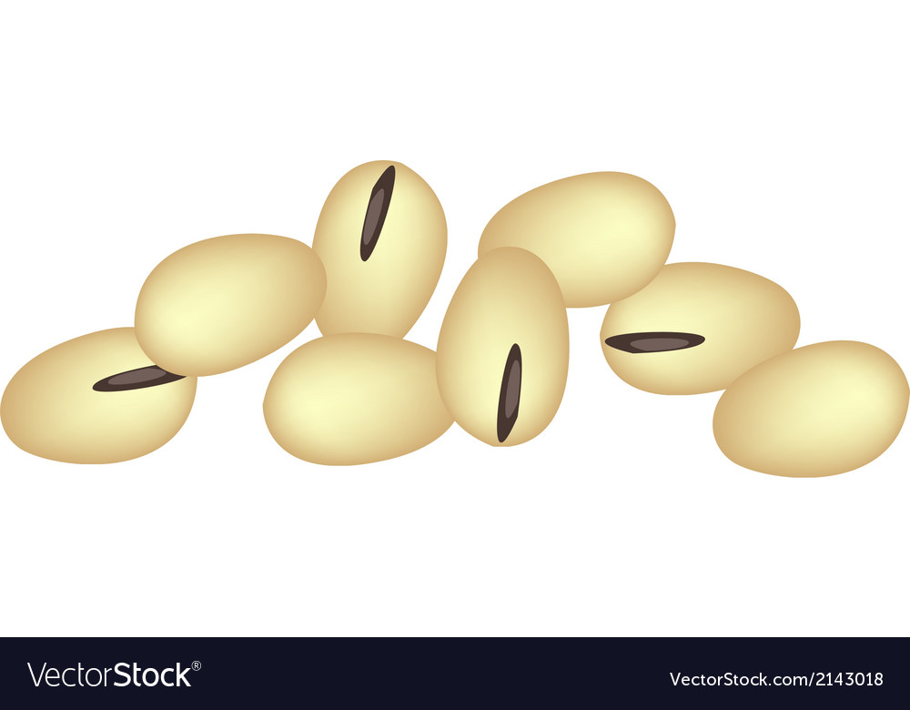 A stack of soybeans on white background vector | Price: 1 Credit (USD $1)