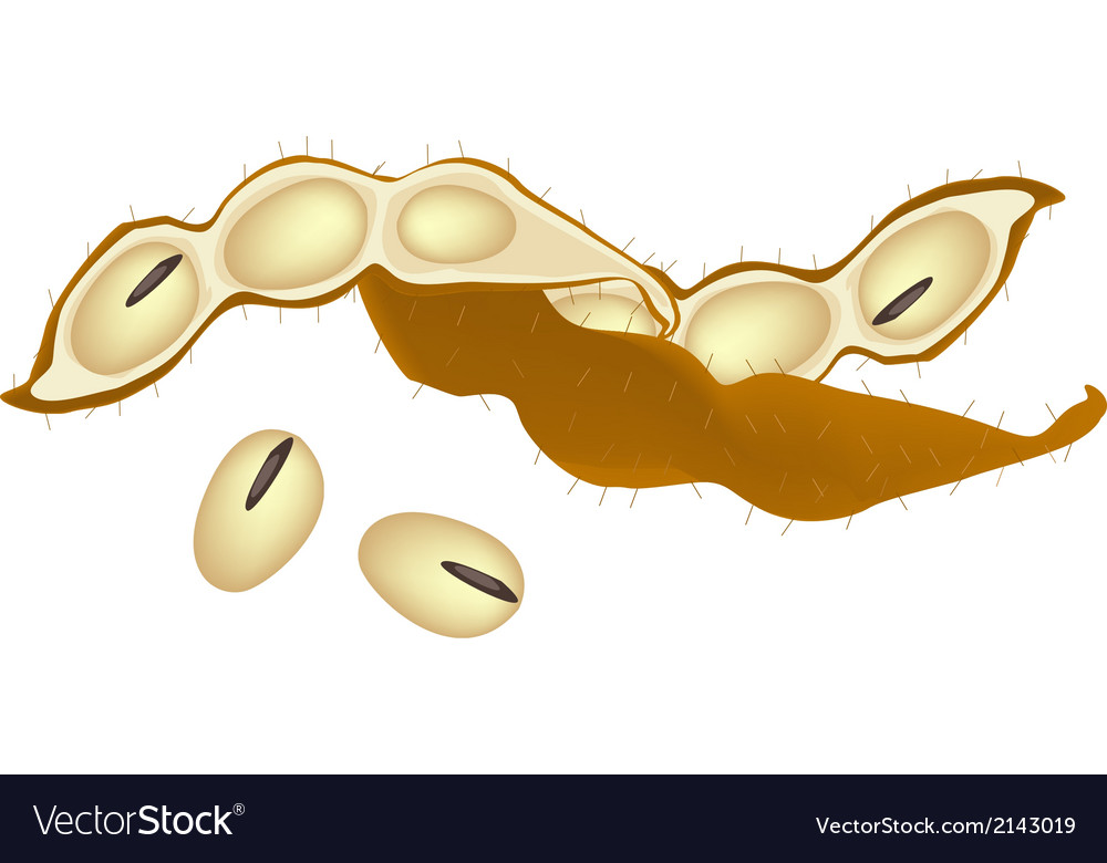 A heap of dried soybeans on white background vector | Price: 1 Credit (USD $1)