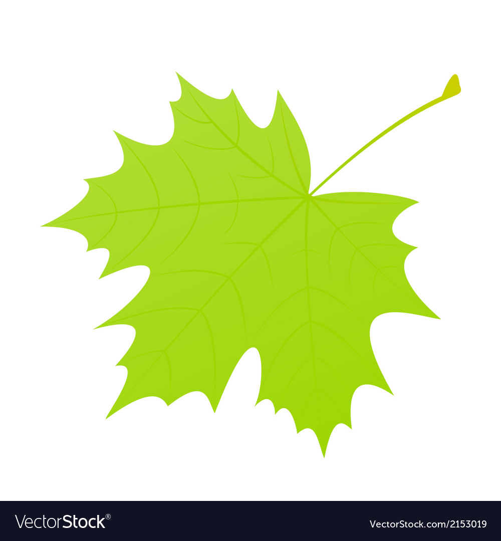 Green maple leaf vector | Price: 1 Credit (USD $1)