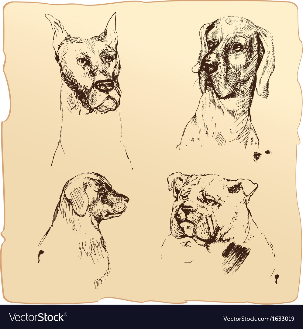 Set of dogs heads - dalmatian bloodhound bulldog h vector | Price: 1 Credit (USD $1)
