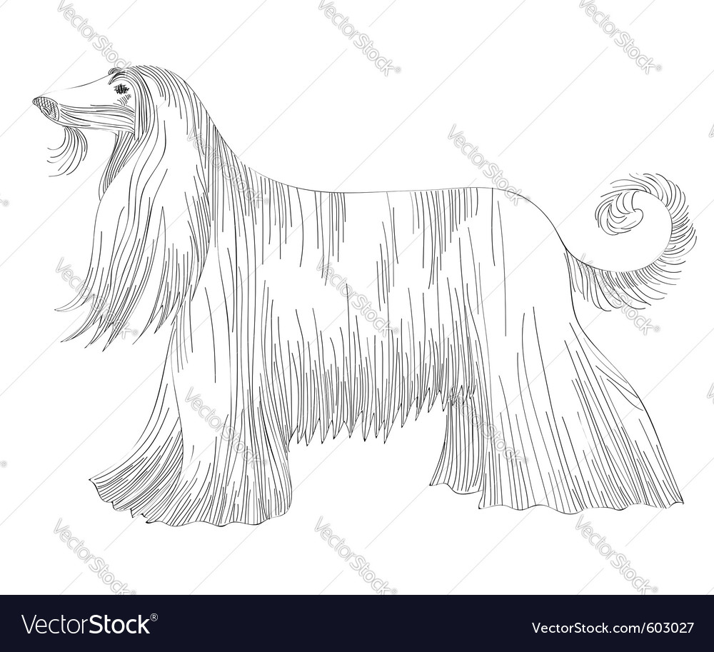 Afghan hound vector | Price: 1 Credit (USD $1)