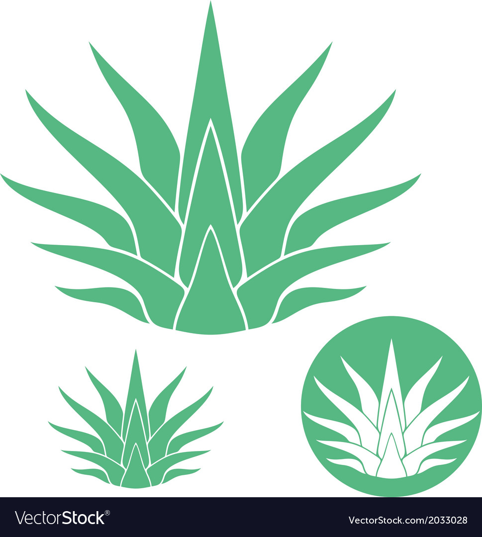 Agave vector   Price: 1 Credit (USD $1)