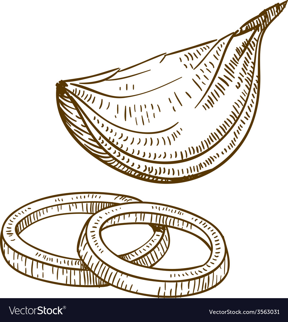 Engraving onion slices vector | Price: 3 Credit (USD $3)
