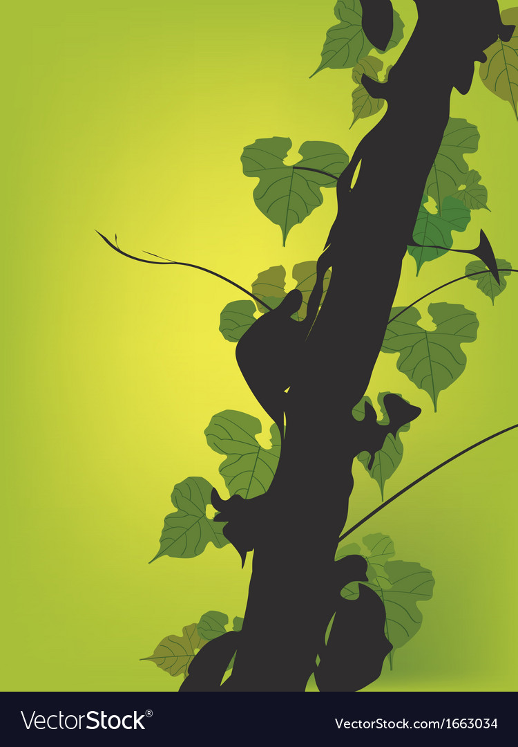 Vine growing on a tree vector | Price: 1 Credit (USD $1)