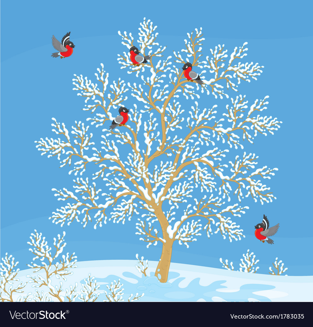 Bullfinches vector | Price: 1 Credit (USD $1)