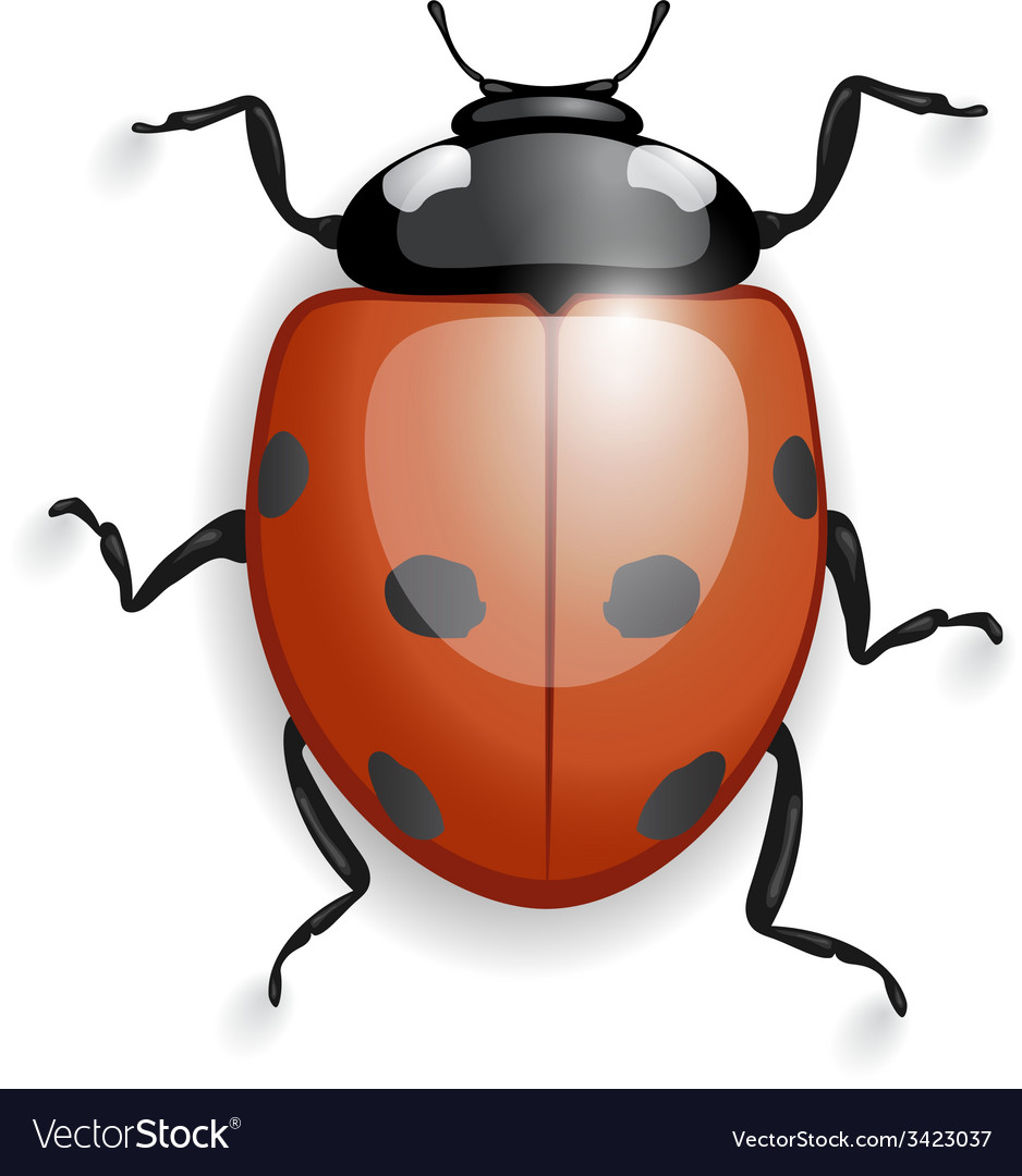 Ladybug isolated with shadows vector | Price: 1 Credit (USD $1)