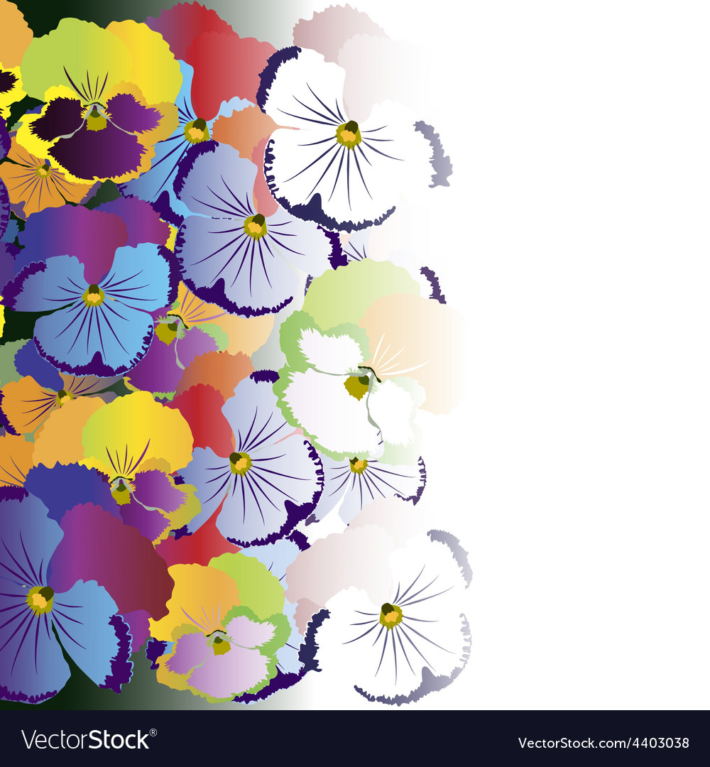 Colored pansy flowers on white background vector | Price: 1 Credit (USD $1)