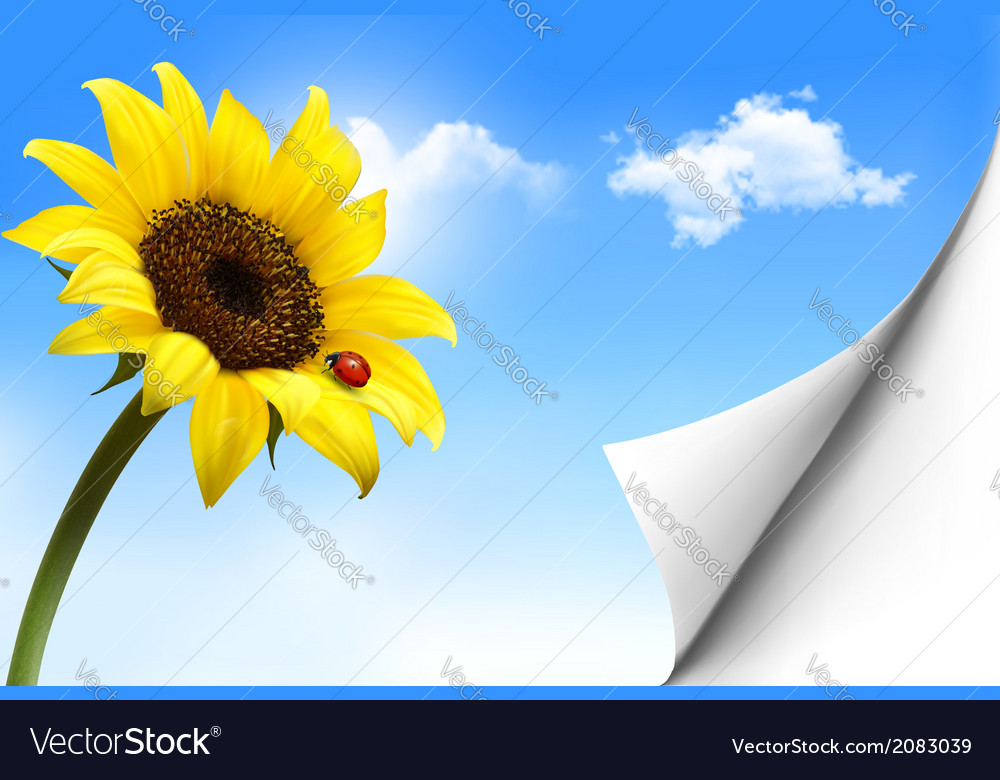Nature background with yellow sunflower vector | Price: 1 Credit (USD $1)