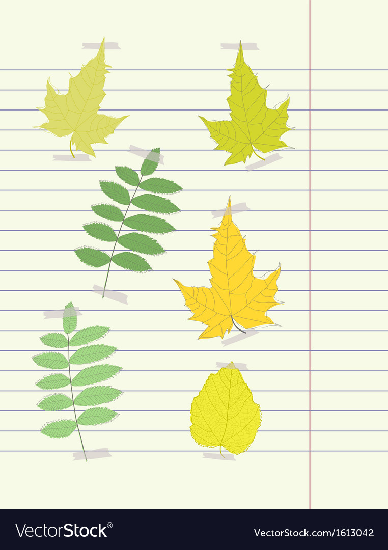 Hand drawing autumn leaf vector | Price: 1 Credit (USD $1)