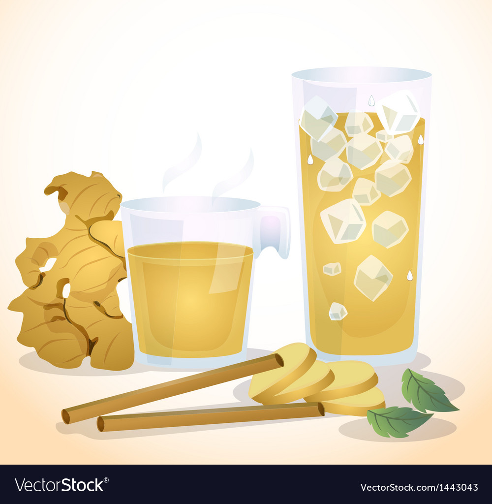 Ginger vector | Price: 1 Credit (USD $1)