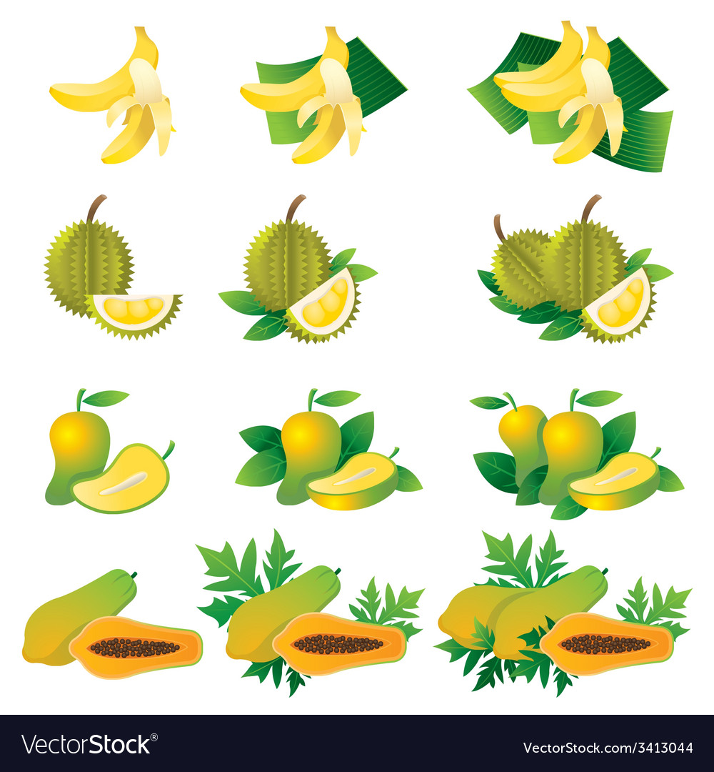 Banana durian mango papaya vector | Price: 1 Credit (USD $1)