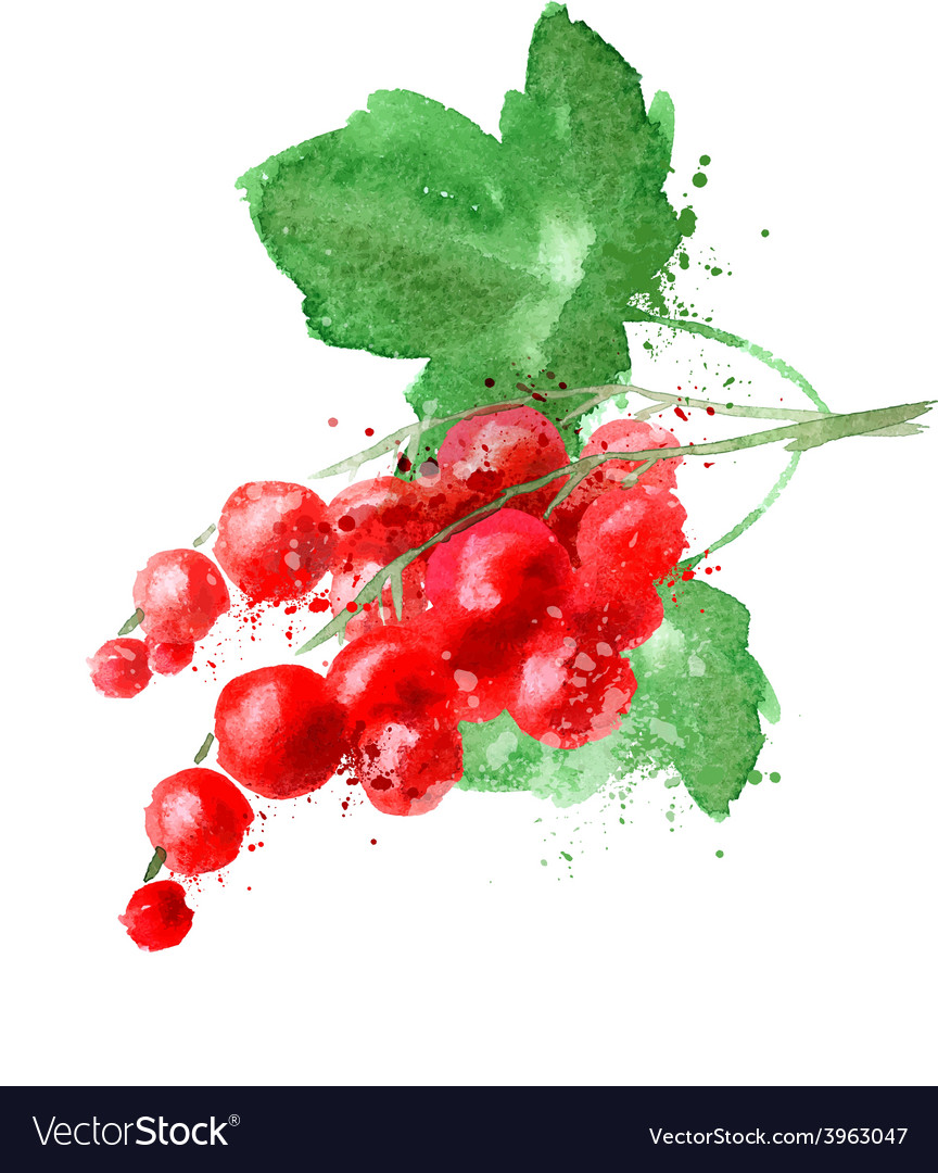 Red currant logo design template fruit or vector   Price: 1 Credit (USD $1)