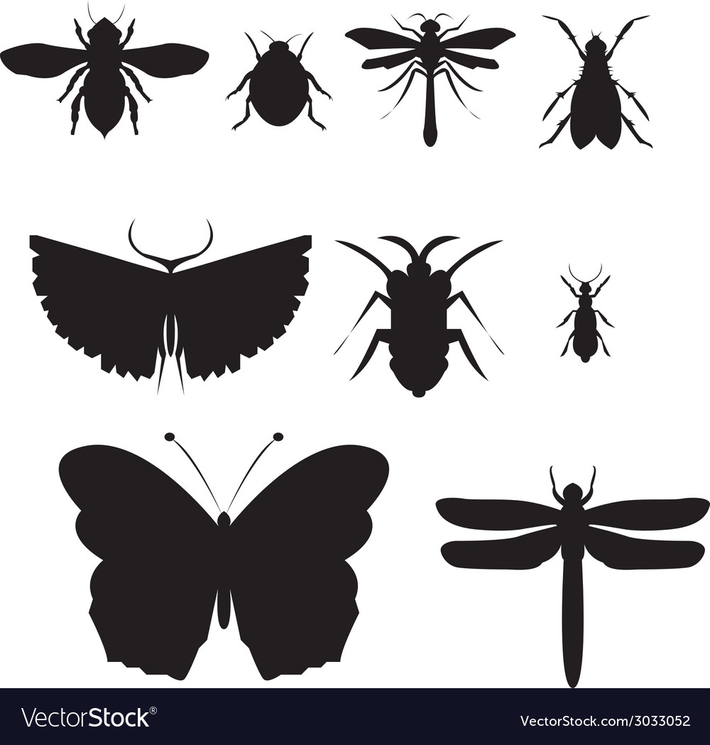 Black insect icon set vector | Price: 1 Credit (USD $1)