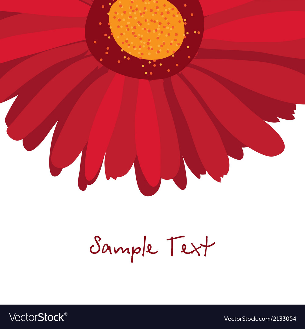 Burgundy red gerbera flower on a white background vector | Price: 1 Credit (USD $1)