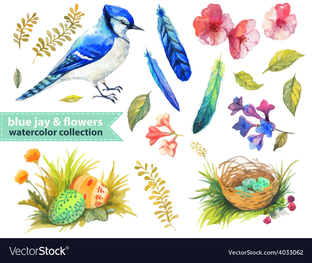 Blue jay and flowers collection vector | Price: 3 Credit (USD $3)