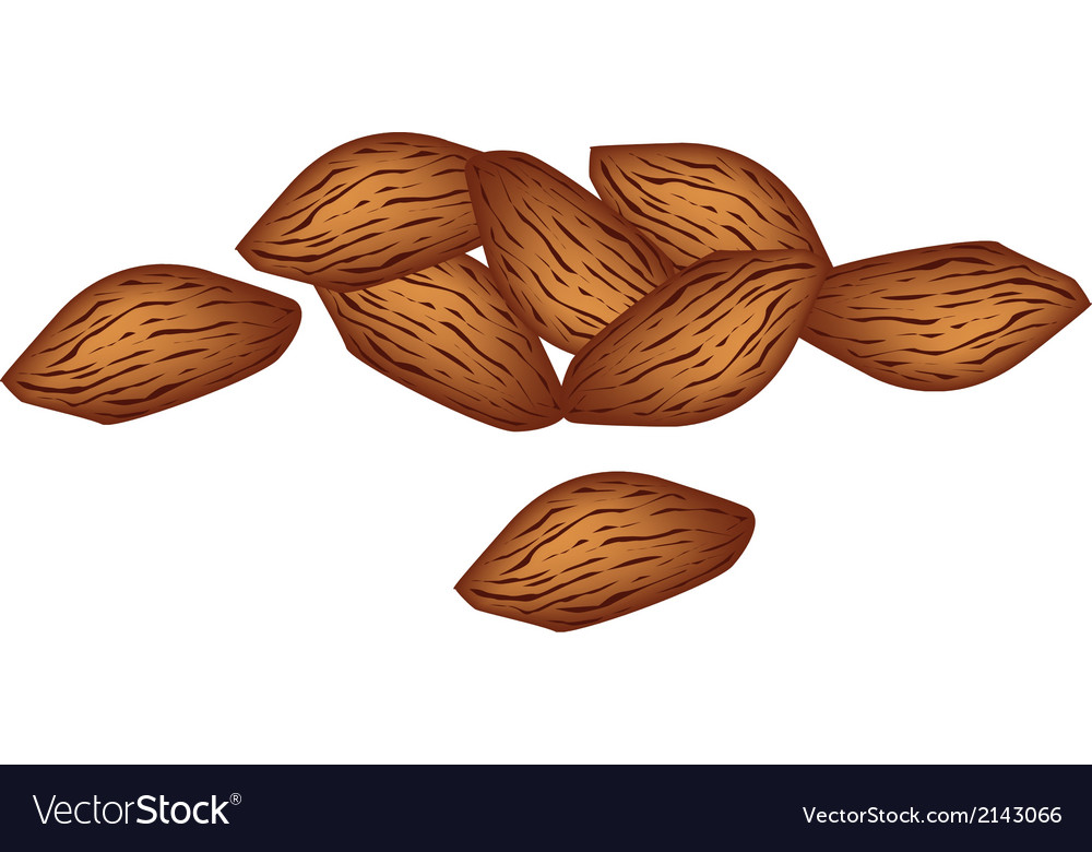 A stack of almonds on white background vector | Price: 1 Credit (USD $1)