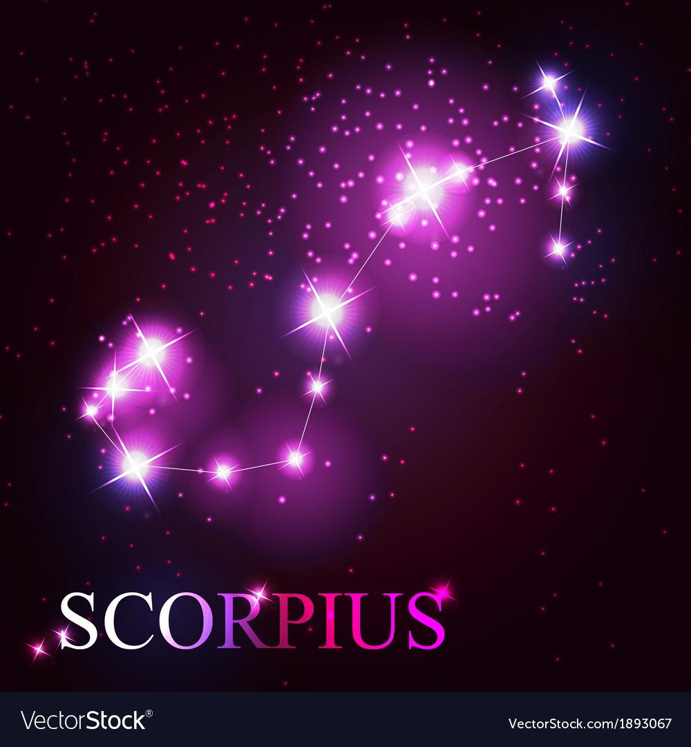 Scorpius zodiac sign of the beautiful bright stars vector | Price: 1 Credit (USD $1)