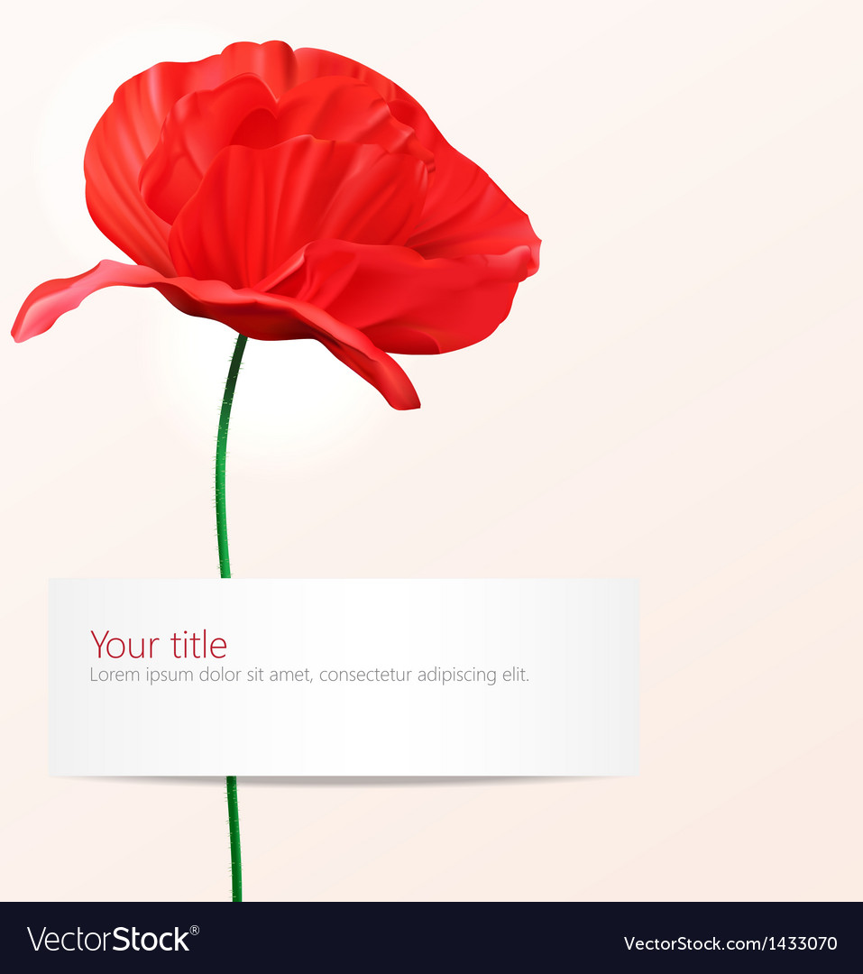 Background with poppy flower vector | Price: 1 Credit (USD $1)